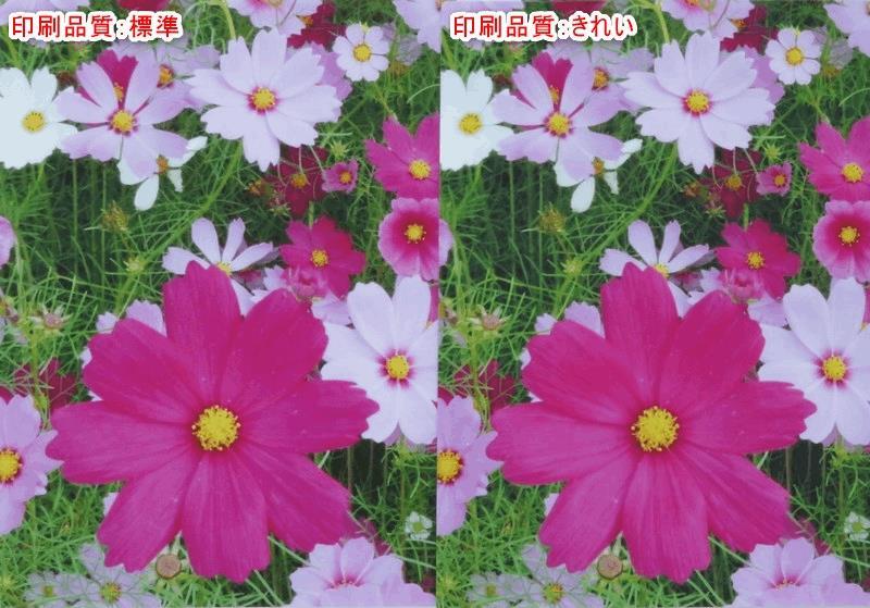 エプソンプリンタ 印刷品質の比較
